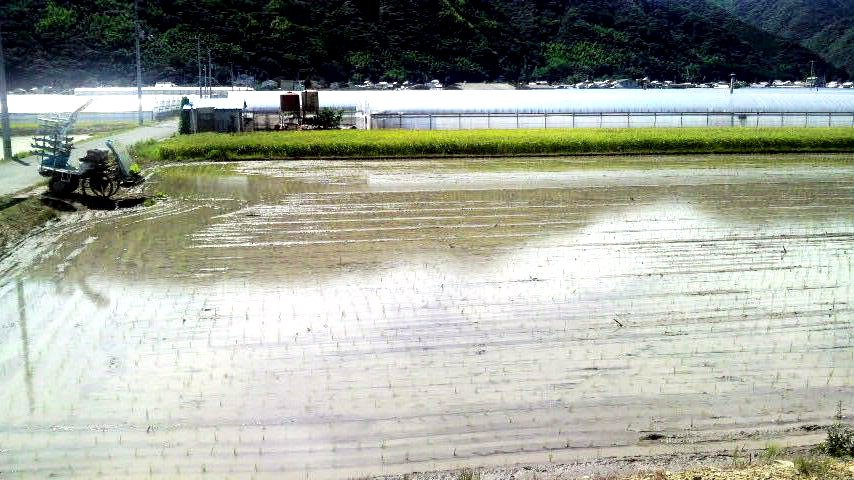 高知県安芸市 - 犬小屋製作工房Kの犬小屋ブログ ホーム 犬小屋 猫 鶏小屋 屋外 室内 ケージ
