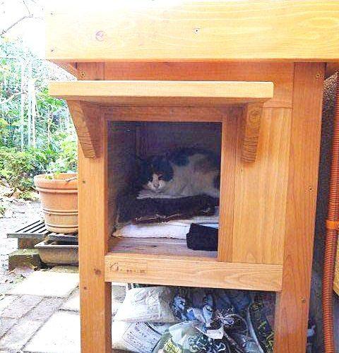 野良猫の小屋