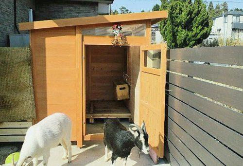 山羊の小屋